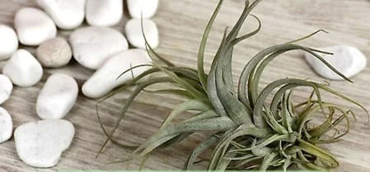 EcoCentric Resin & Air Plant Workshop